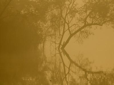 fog_mangroves