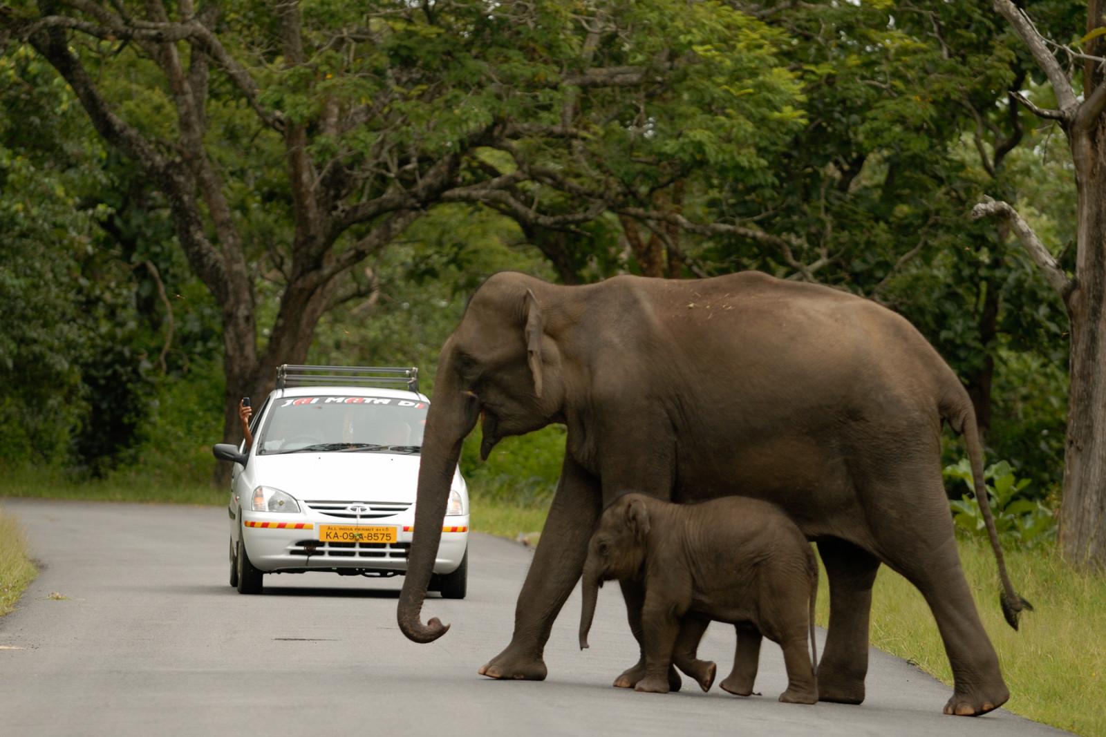 the elephants must go u2013 peepli